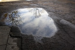 Abstract trees reflections into water puddle on grey asphalt street road spring season concept