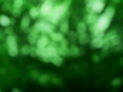 Abstract treetop light. blur abstract background.
