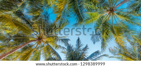 Abstract tropical background boost up colors. Nature background. Beach travel card. Perfect tropical nature concept, coconut palm trees, leaves on blue sky, sunny day