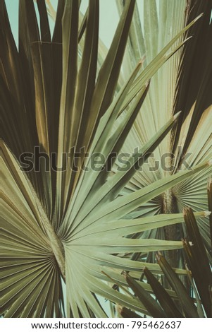 Abstract tropical background retro toned. Vintage background. Travel card. Soft focus #795462637