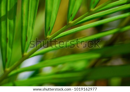 Abstract tropical nature: artistic macro of green palm tree leaf  - Shutterstock ID 1019162977