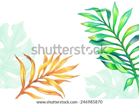 abstract tropical palm leaves, jungle plants, watercolor illustration isolated on white background