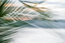 Abstract tropical palm tree leaves in motion against sunlight background Blurred leaves in black and white moving in summer wind on the beach Miami Florida, ideal for travel blog, shop, magazines