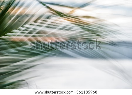 Abstract tropical palm tree leaves in motion against sunlight background Blurred leaves in black and white moving in summer wind on the beach Miami Florida, ideal for travel blog, shop, magazines stock photo