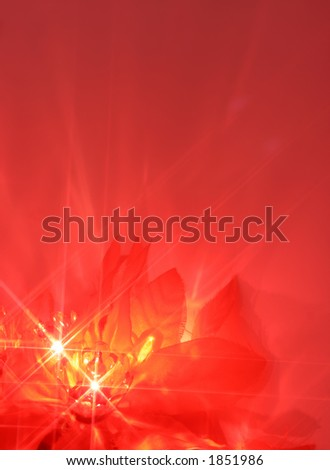 abstract twinkling poinsettia christmas lights