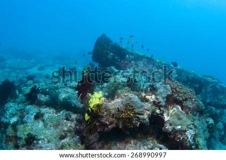 Abstract underwater scene #268990997