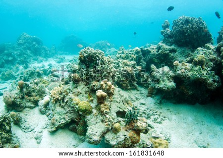 abstract underwater scene, Coral reef in deep blue sea, Anilao, Philippine.