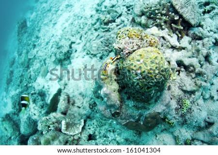 abstract underwater scene sun rays in deep blue sea, Anilao, Philippine.