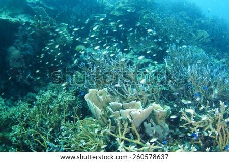 Abstract underwater scene sun rays in deep blue sea, Coron , Palawan,  Philippines.
