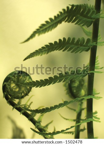 abstract view of ostrich fern