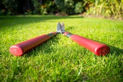 Abstract view of typical garden shears seen laying on a recently mowed lawn. The shears have been used for hedge pruning.