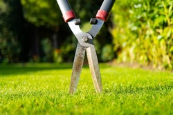 Abstract view of typical garden shears seen lodged into a freshly cut lawn. The shears have been used to trim garden bushes.