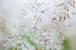 Abstract vintage blurred soft hipster background of grass with shiny dew water drops