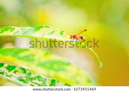 Abstract vintage picture style of red hornets on green leaf background, selected focus.