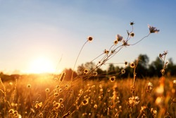 Abstract warm landscape of dry wildflower and grass meadow on warm golden hour sunset or sunrise time. Tranquil autumn fall nature field background. Soft shallow focus