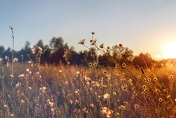 Abstract warm landscape of dry wildflower and grass meadow on warm golden hour sunset or sunrise time. Tranquil autumn fall nature field background. Soft golden hour sunlight at countryside