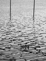 abstract water wave reflection with bamboo pole silhouette, black and white style