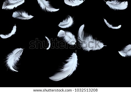 Abstract white feather falling in the dark.