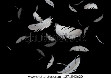 Abstract white feather flying in darkness. black background. #1271543620