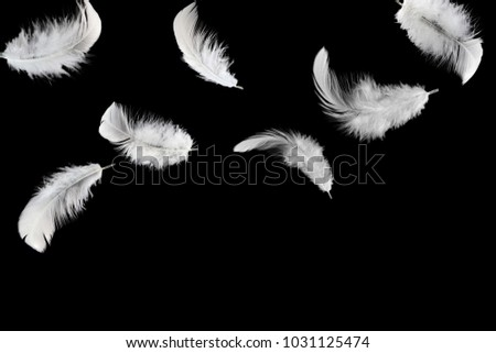 Abstract white feathers falling in the dark