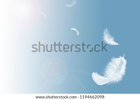 Abstract white feathers floating in blue sky. #1194662098
