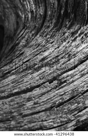 Abstract wooden texture of a tree