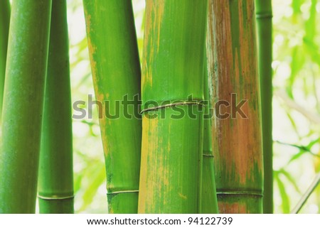 Abstract Zen Bamboo, Artistic Background
