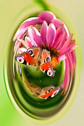 abstraction, butterflies sitting on flowers, in a capsule