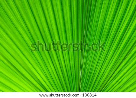 "Abstraction ""Palm Leaf""