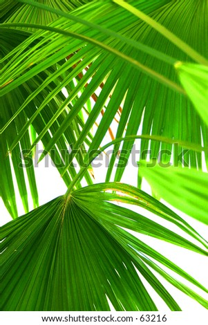 "Abstraction ""Palm leaf '  To see my abstraction collection use Keyword Search: ""gamusa"""