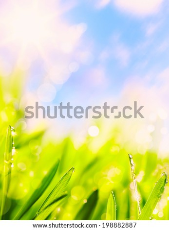 abstracts of natural summer green  grass natural background