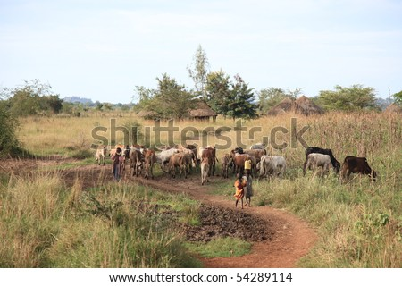 Abuket River in Uganda - The Pearl of Africa - stock photo