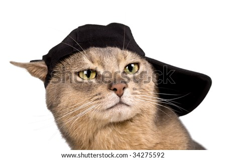 Abyssinian cat in baseball cap isolated on white