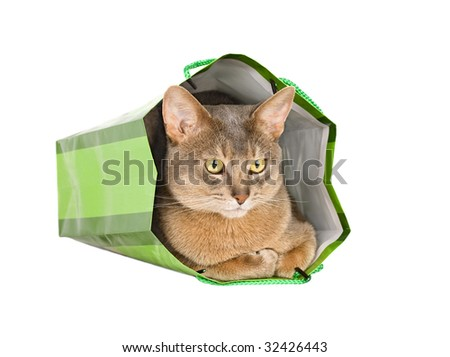 Abyssinian cat in green bag isolated on white