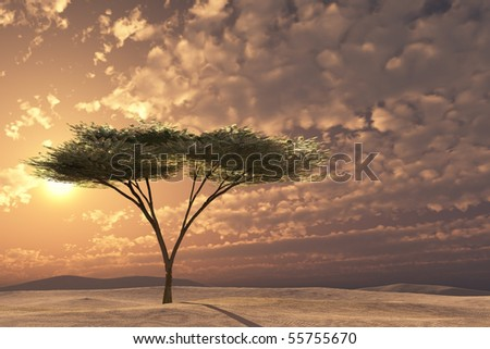 Acacia tree golden sunset on imaginary sand dunes or plain.