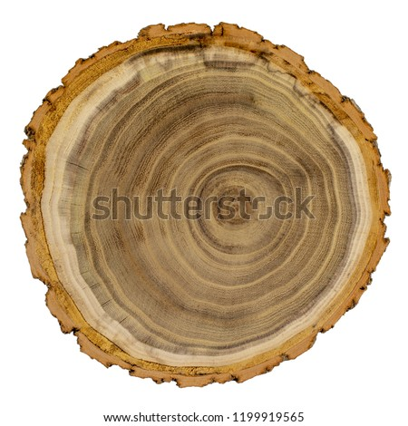 Acacia tree trunk cross section isolated on white background