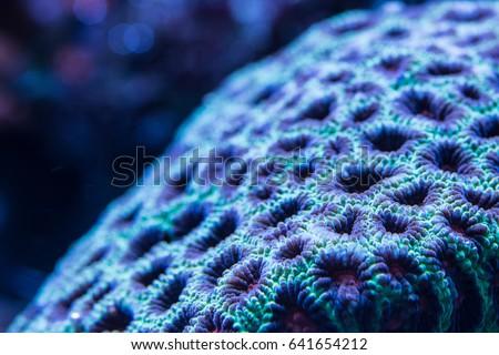 Acanlord zoa corals abstract macro #641654212