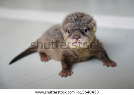 acction of baby otter on tfhe floor