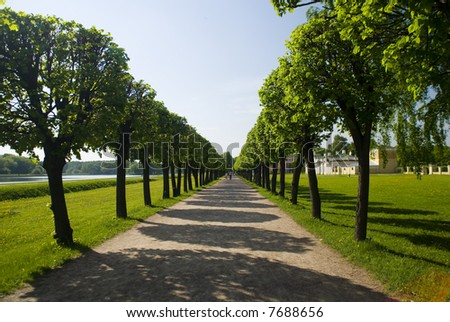 accurate summer alley with shadows of trees