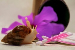 Achatina snail. Close-up. Cotton buds. Cotton pads. Purple flower. Mirror. Personal care and beauty symbols. In the office of a beautician and makeup artist. Relax and spa