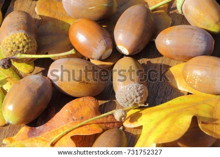 Acorn and oak leaves on a wooden table during autumn