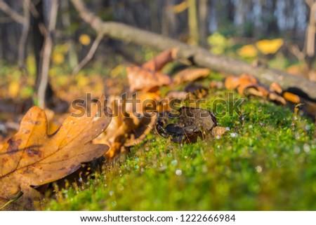 acorn oak bitten by squirrel on green moss of an old fallen tree in the forest. #1222666984