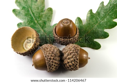 Acorns and oak leaf
