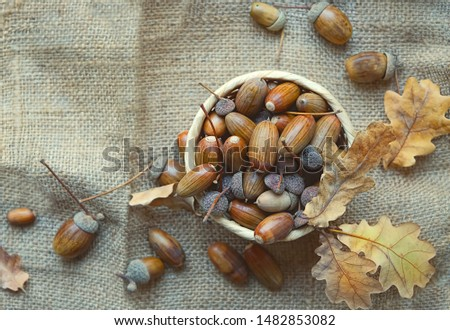 acorns and oak leaves on burlap texture background. autumn time concept. Autumn background for design. fall harvest season. rustic backdrop with acorns and oak leaves. top View. copy space.