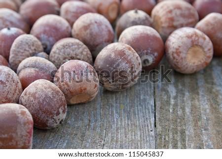 acorns/autumn/fruit s - stock photo