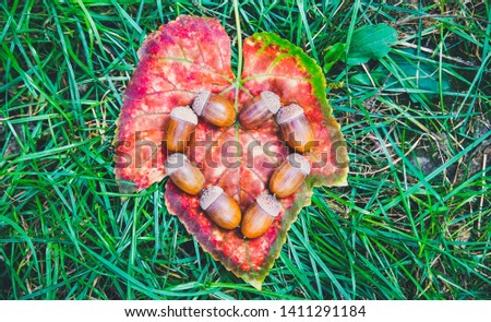 Acorns in shape of heart lying on the yellow leaves in the grass. Love autumn concept. Harvest time. Rustic style village. Natural photo. #1411291184