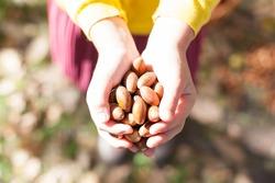 Acorns in the hands. Collect acorns. Women's hands. Walk through the autumn forest. Acorns for children's crafts.