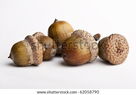 Acorns, isolated on white