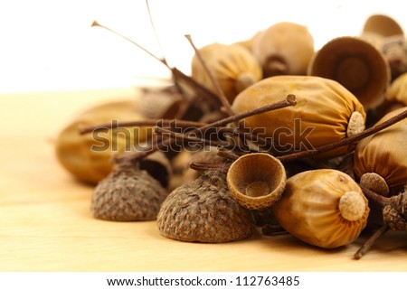 acorns on the white background