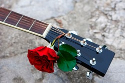 Acoustic guitar headstock decorated by red rose between strings on the wall. Beautiful romantic background